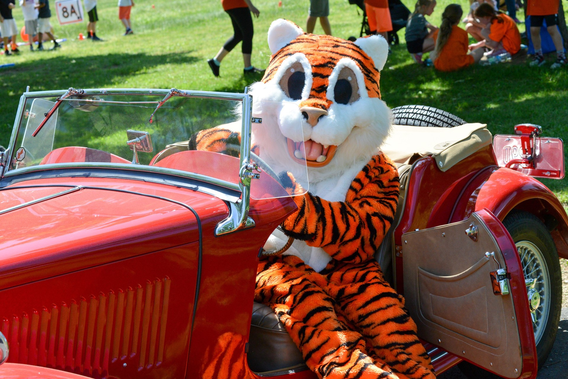 Tiger getting to drive Mrs. Hultquist's car